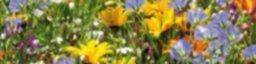Semillas Flores